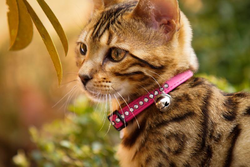 Desparasitação de cães e gatos